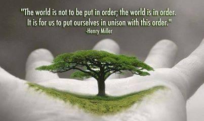 tree order