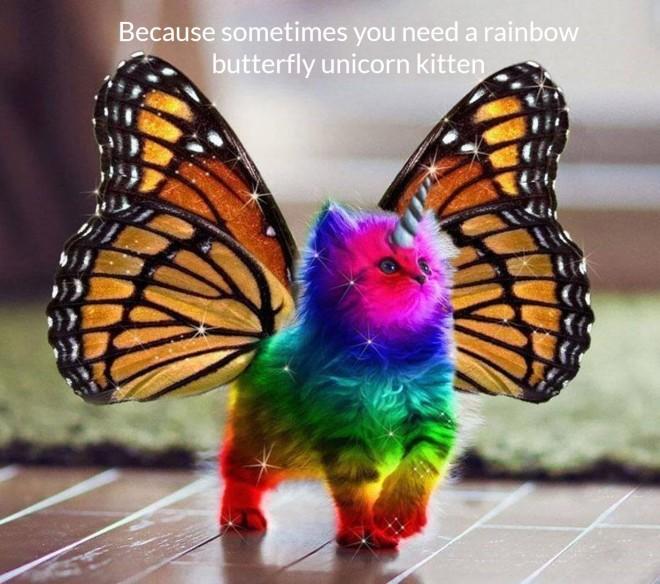 rainbow-kitten